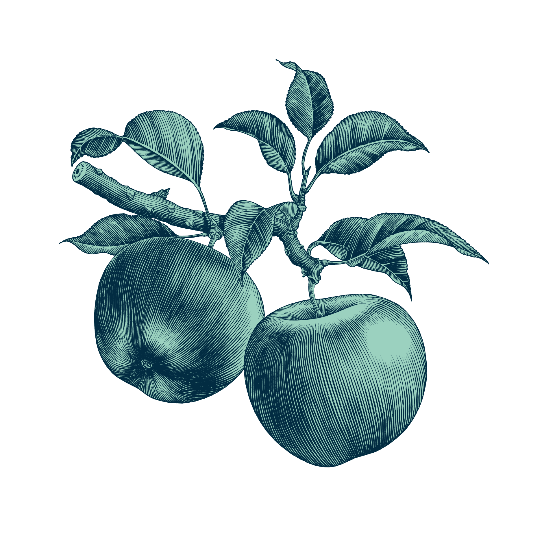 Illustration de pommes